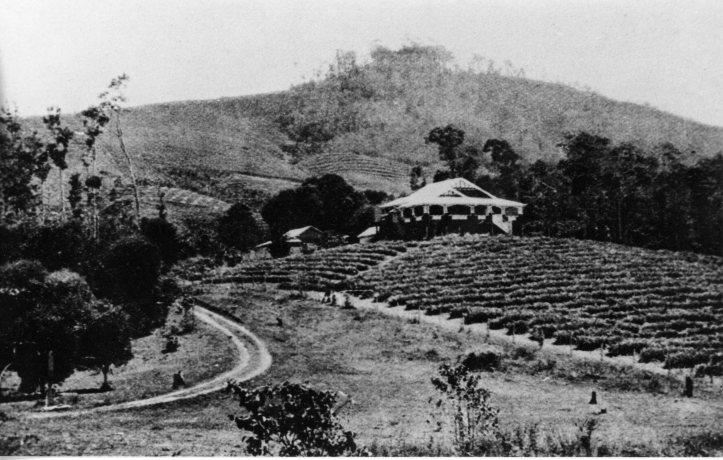 3-maroonda-experimental-farm-at-amamoor